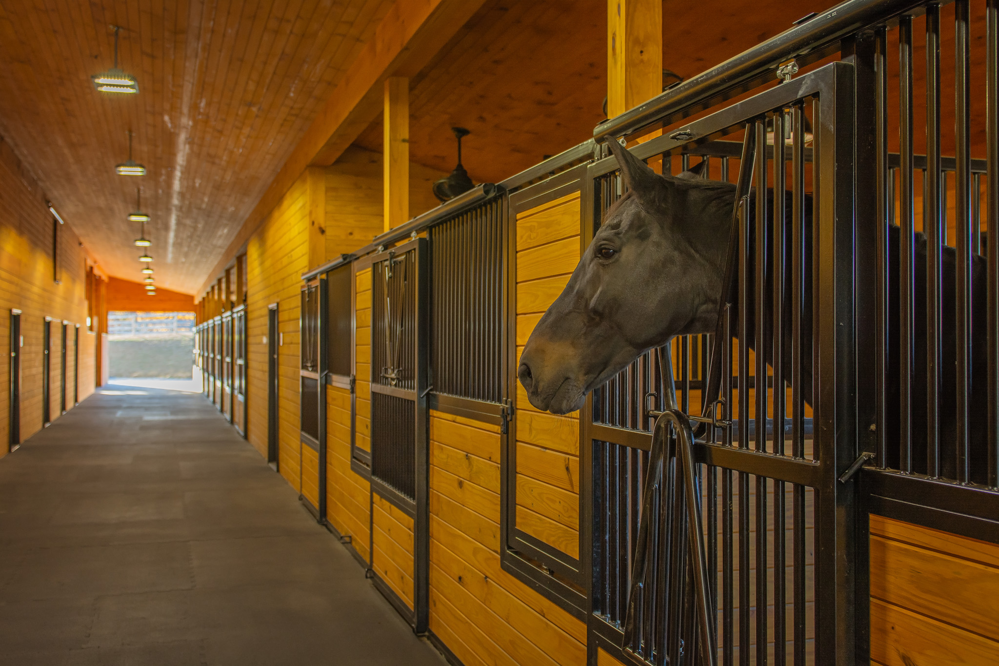 horse in stable.jpg