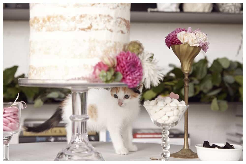 happily-cat-wedding-cake