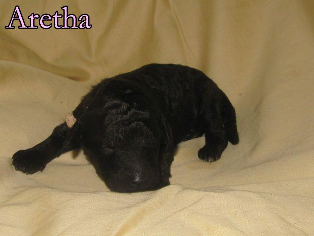 10 Aretha.JPG