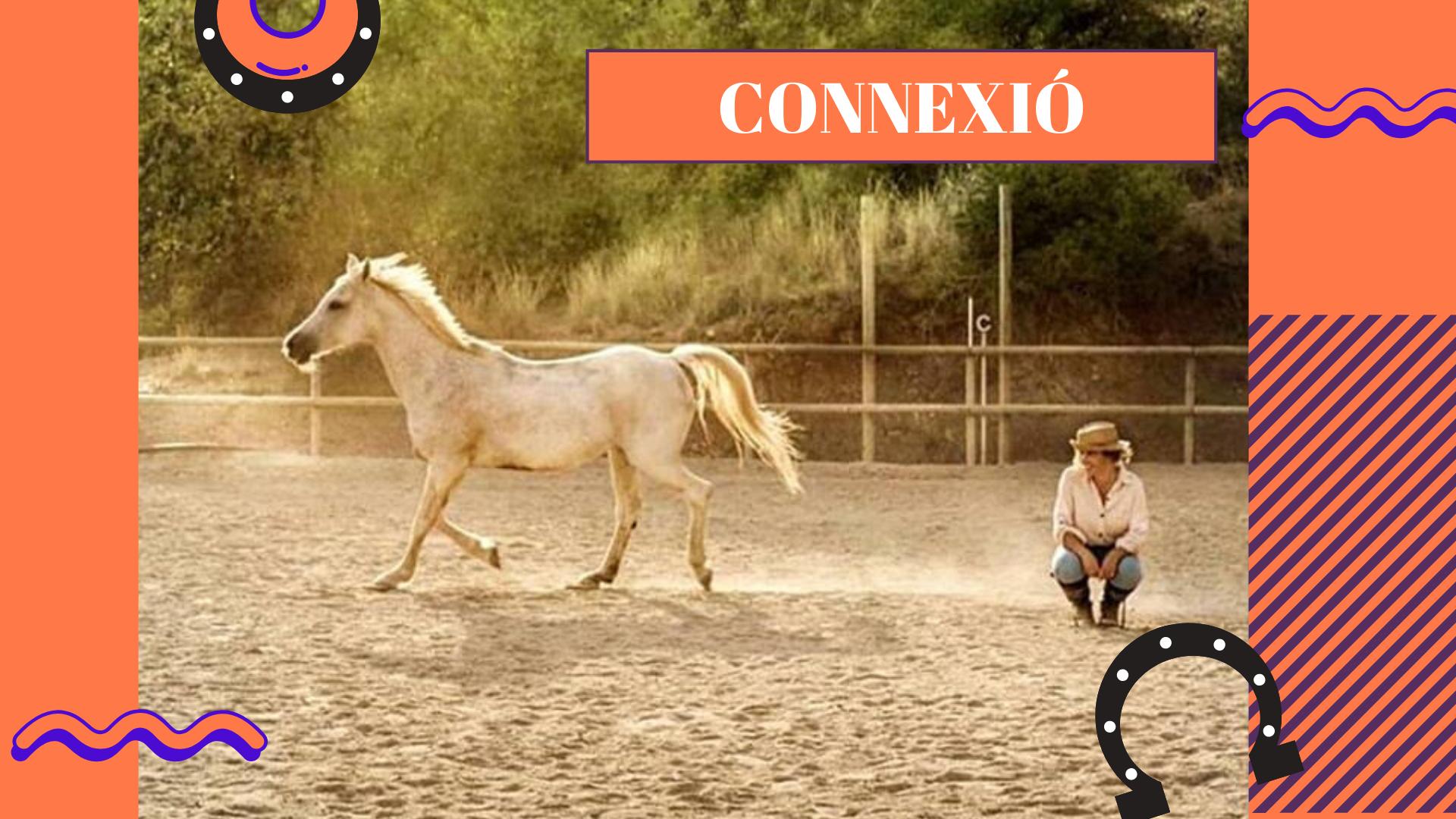 Team building con caballos, eventos experience