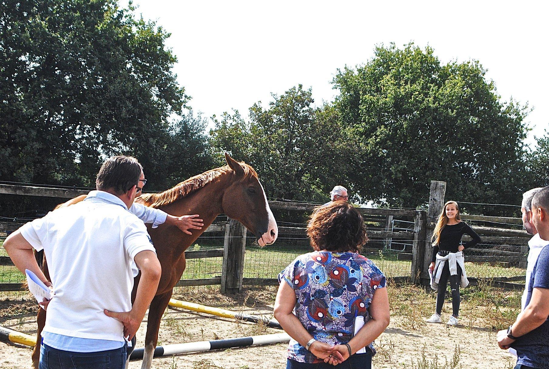 Team building con caballos Navidad Experience, eventos experience
