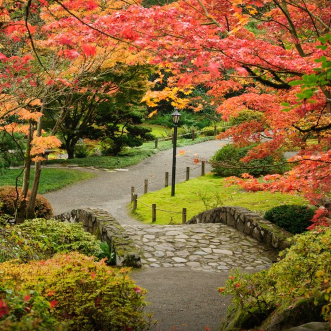 W A S H I N G T O N P A R K A R B O R E T U M - Trees, plants, flowers, a widely-acclaimed Japanese Garden, nature walks, bike paths, it's all here! You can have events at the lovely Center for Urban Horticulture or Wisteria Lane Hall, sign up for a family night hike, check out the West's best winter garden, and so. much. more. !!!