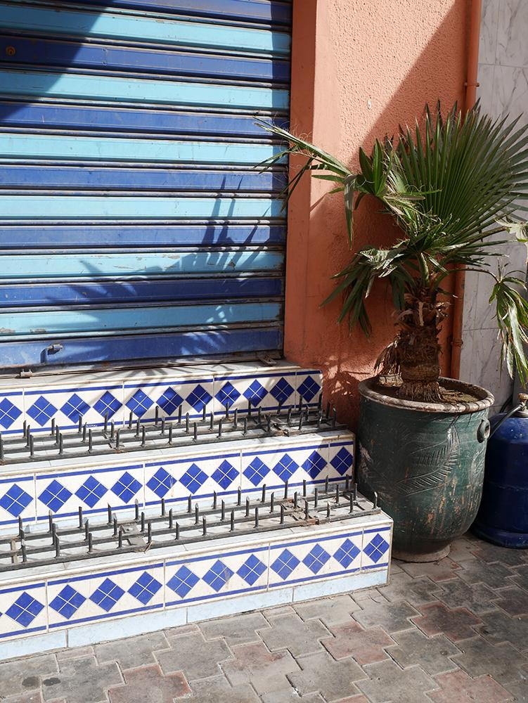 emily baker marrakech plant.jpg
