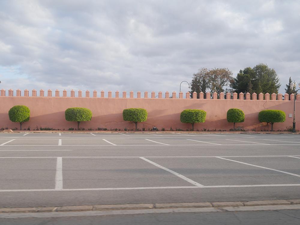 emily baker marrakech trees.jpg