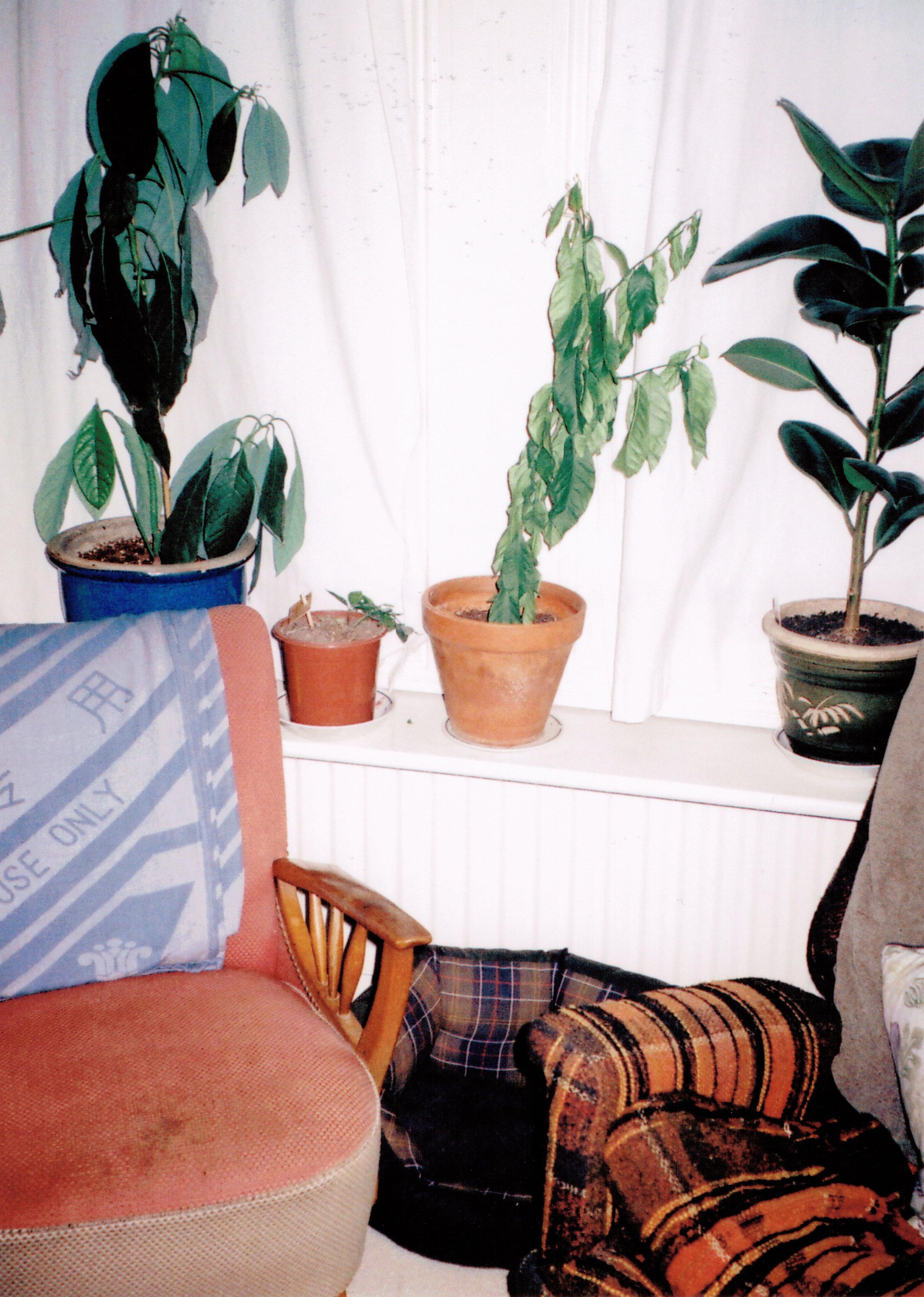 Jordan's flat in Streatham
