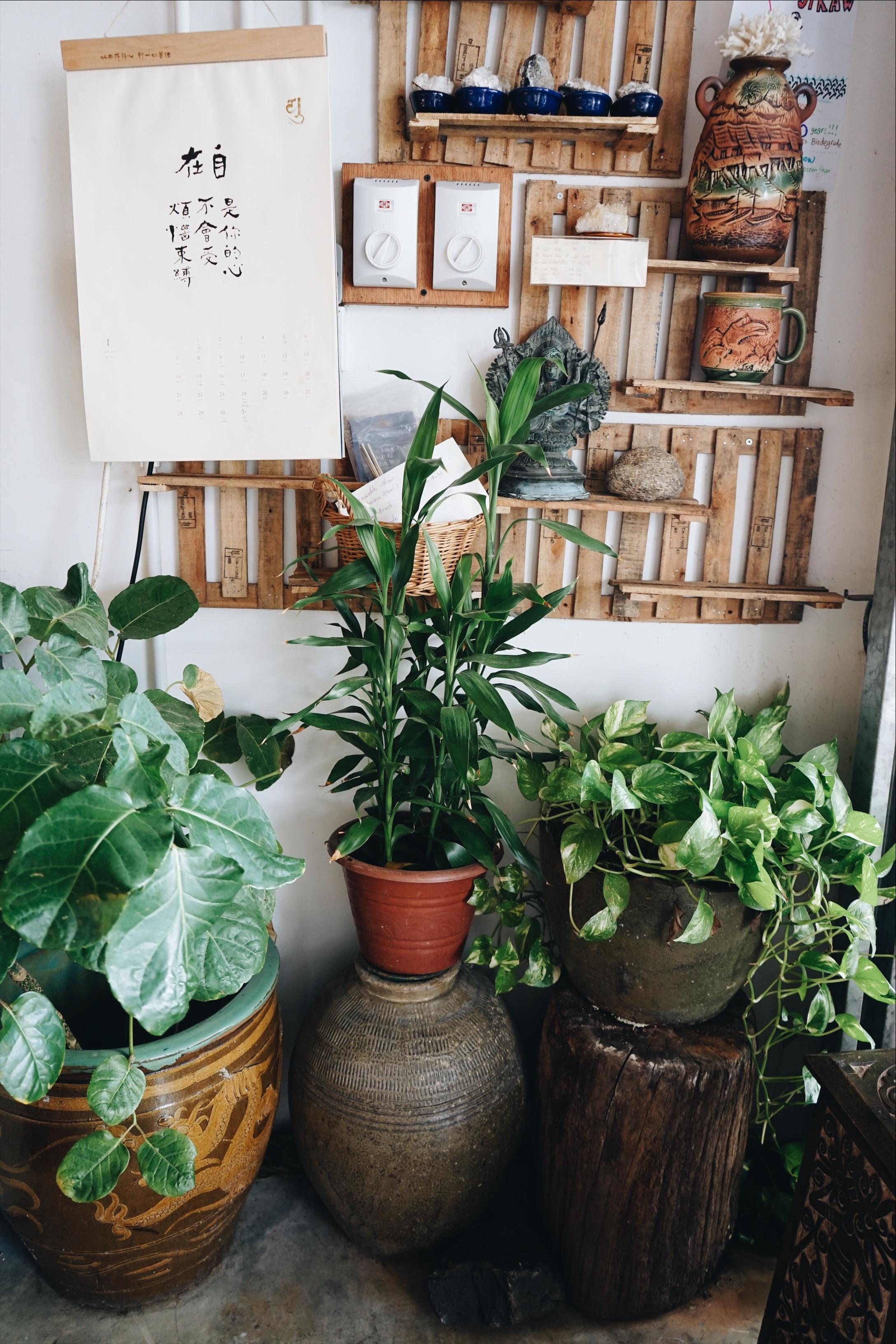 Fig Tree Cafe, Kutching, Borneo