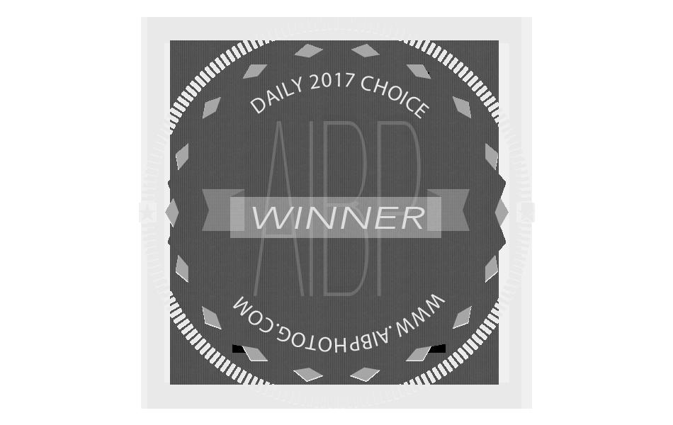 2017 Daily Choice Badge.png