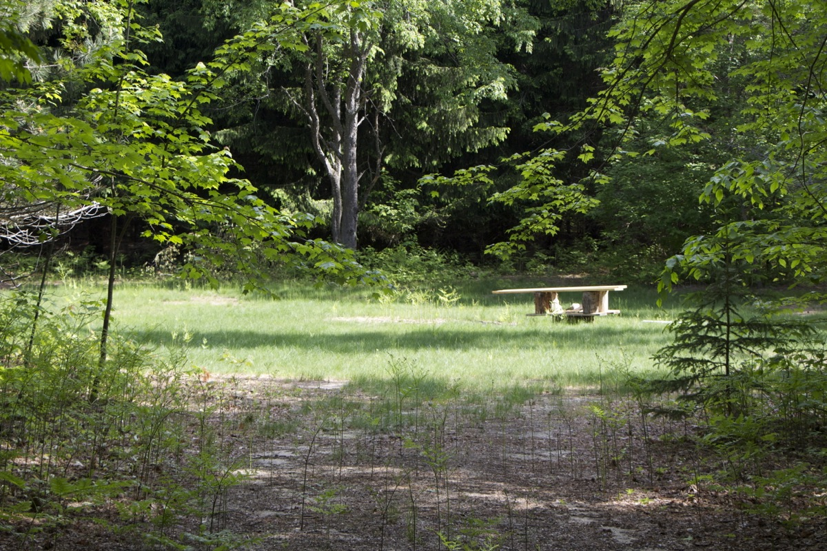 NATURAL CAMP SITES  We have five Camp Sites close to the pavilion and rest rooms along with several remote sites available.