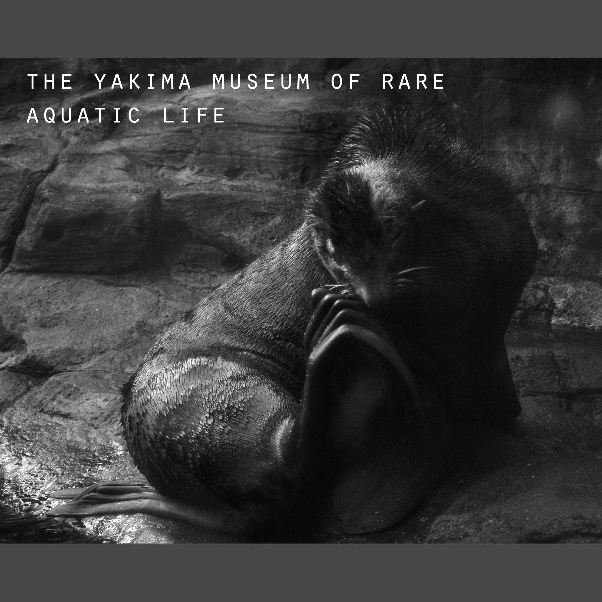 Rare aquatic life.jpg