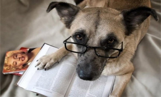 dog and book.jpg