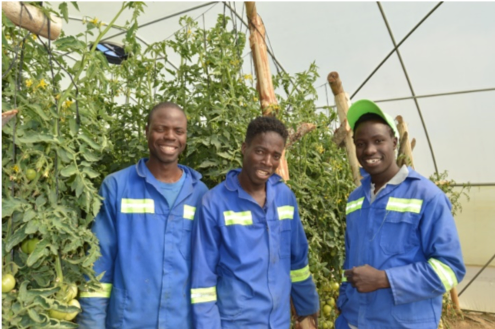 "Around mid-February three young men from the Hwange Binga area joined our Habitation of Hope Agro ""Skills Training Center. The three are getting skills in horticulture and agronomy. Additionally, they will get some skills from Harare Polytechnic College. Currently they are doing welding."