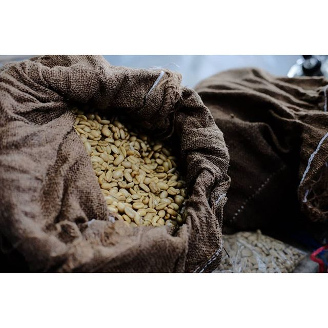 Seeds for the next crop !  #specialtycoffee #nicaragua #nicaraguacoffee #coffeeinnovation #coffeefarmers #coffeeculture #coffeefarm #coffeecultivation #perfectdailygrind #allthingsoffee #thirdwavecoffee #coffeeroaster #barista #directtrade #relationshipcoffee #coffeetimes #fuji #fujifilm #fujixt1 #fujixseries #fujicoffee photographer #photography