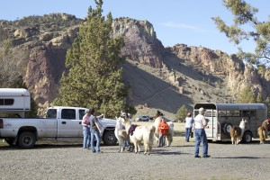 New Year's Day Llama Hike at Smith Rock State Park staging at Rex house