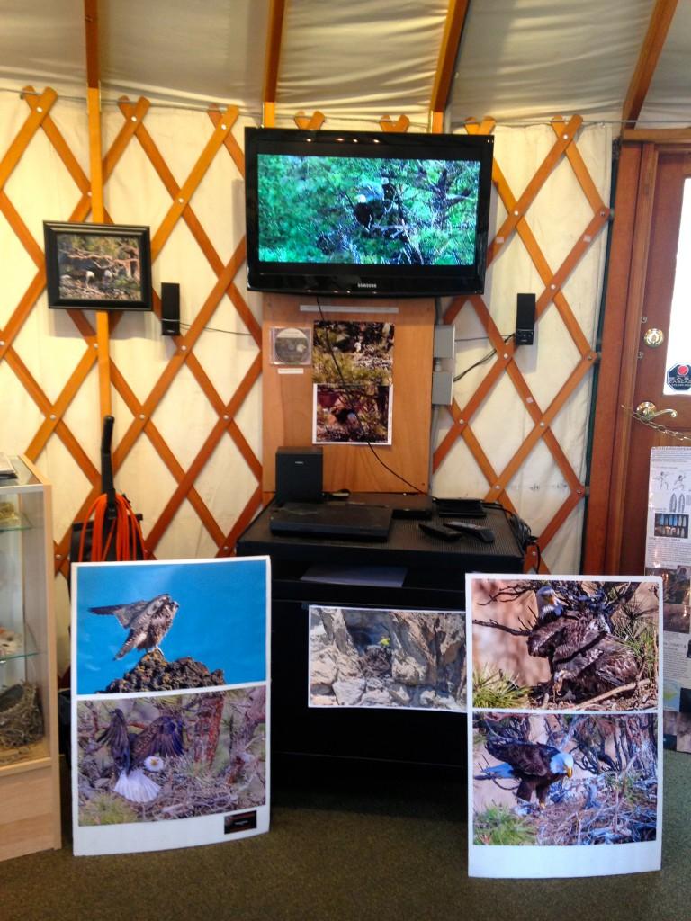 Smith Rock State Park Welcome Center  Bald Eagle  Exhibit