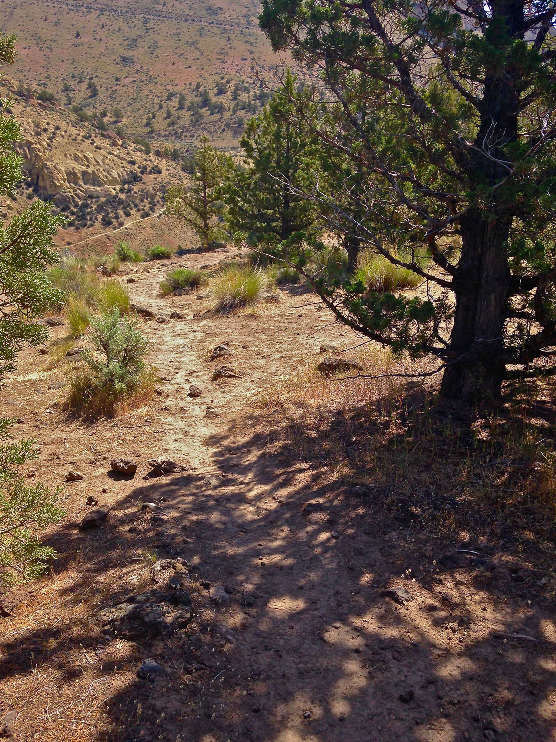 The path gets a bit more pronounced as you wander into the sage and juniper trees.