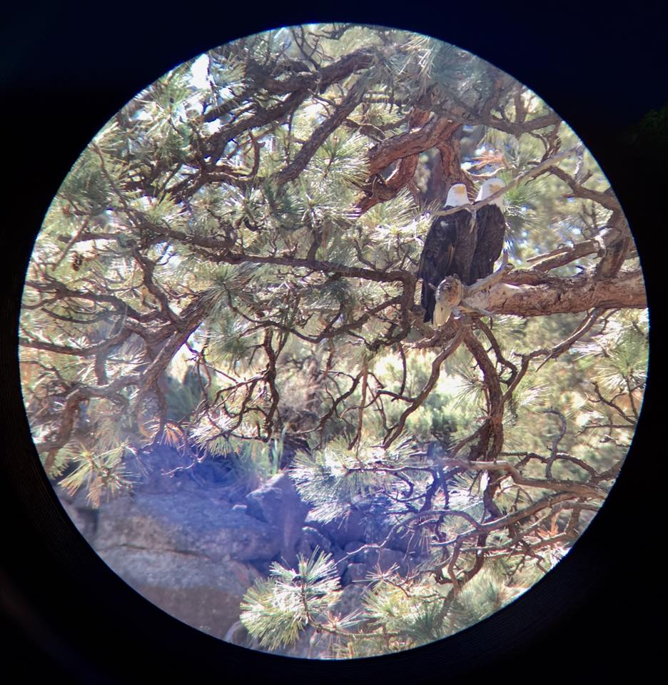 The bald eagle parents and nest taken with an iPhone through the park's spotting scope.