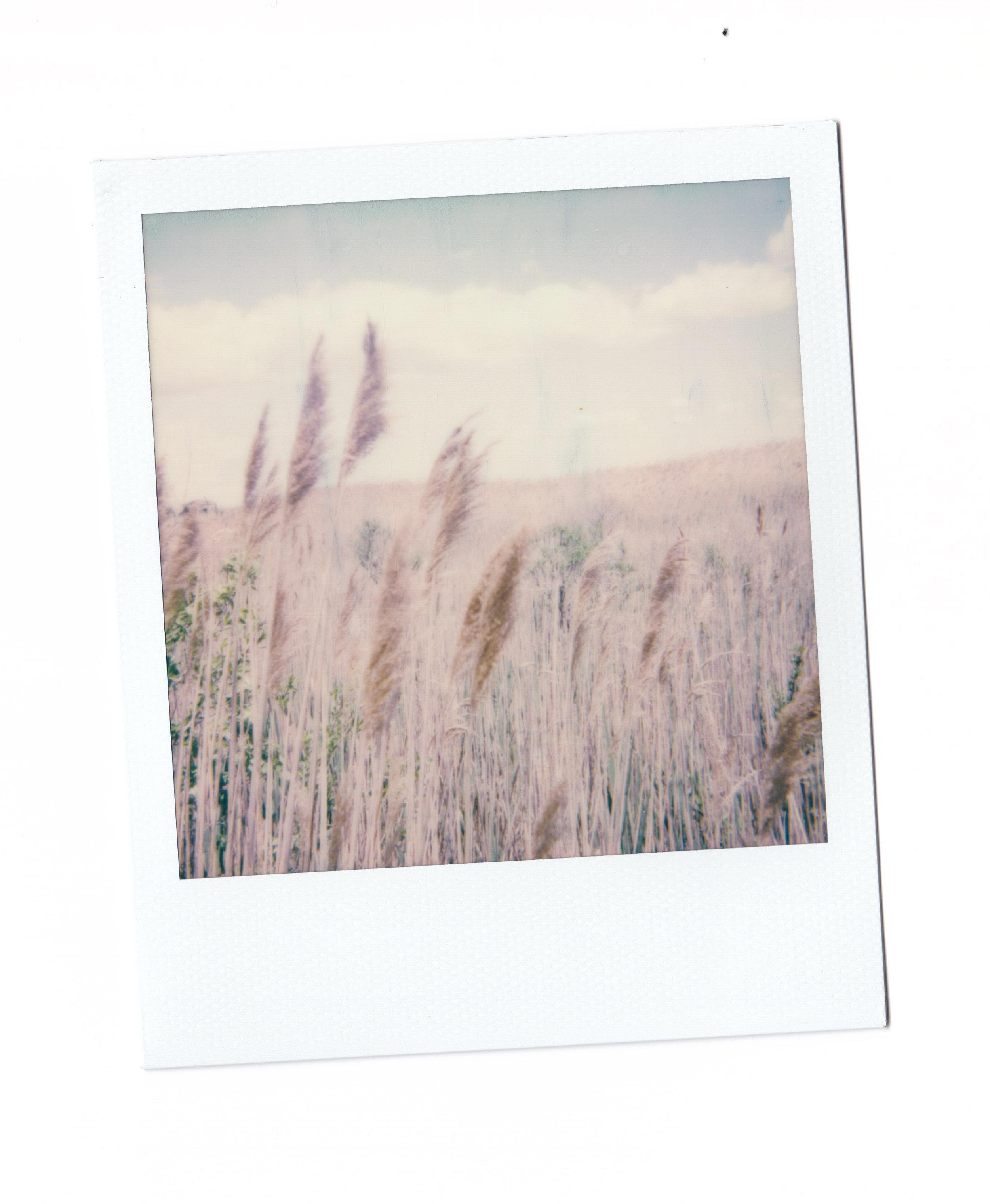 Fire Island Polaroids-4.jpg