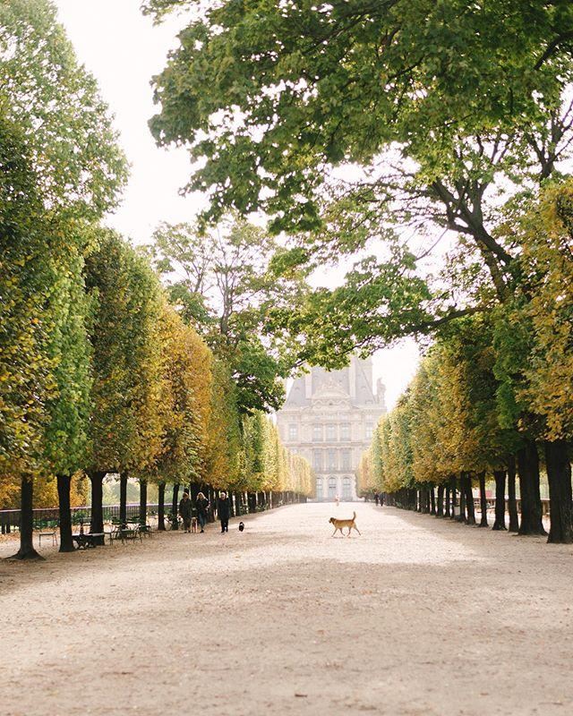 An early morning walk in Autumn 🍂  ___________________________________________________ #brittanymariephotographe #brittanymariephotographie #joyofliving #artofliving  #professionalphotographerparis #photographerinparis #parisphotographer #parisfilmphotographer #filmphotographerinparis #filmphotographerparis #englishspeakingphotographerparis #filmphotographerparis #parisphotography #paris #autumninparis #thisisparis #parisjetaime #parismonamour #seemyparis #jadoreparis #wheretofindme #tuileriesgarden #louvre #museedulouvre #iamatraveler #travelerinparis