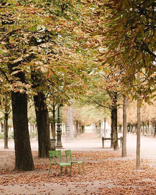"""When people look at my pictures I want them to feel the way they do when they want to read a line of a poem twice."" Robert Frank  Tuileries, October 2019.  New print selection available - link in bio 🌿  _______________________  #brittanymariephotographe #brittanymariephotographie #joyofliving #artofliving #autumninparis #professionalphotographerparis  #photographerinparis #parisphotographer #parisfilmphotographer #filmphotographerparis #filmphotographerinparis #parisphotography #paris #thisisparis #parisjetaime #parismonamour #jadoreparis #wheretofindme #pursuepretty #welltraveled #livefolk  #beautifuldestinations #destinationphotographer #francephotographer #francephotographer"