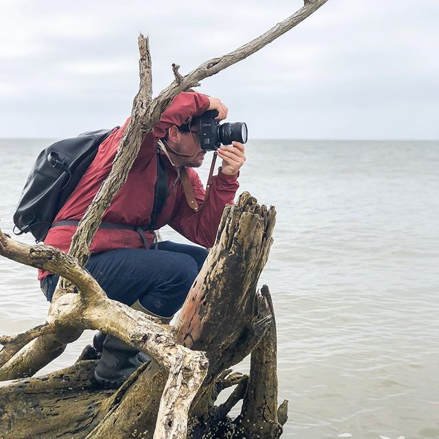 Thanks to @madibjeffery for taking this photo about one month ago. We were walking and capturing the shoreline at Cemetery Beach in Dorchester County, MD. Erosion, salt intrusion, and invasive plants have turned this region into a new type of cemetery for native trees and marsh.