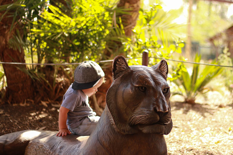tiger at the Phoenix Zoo