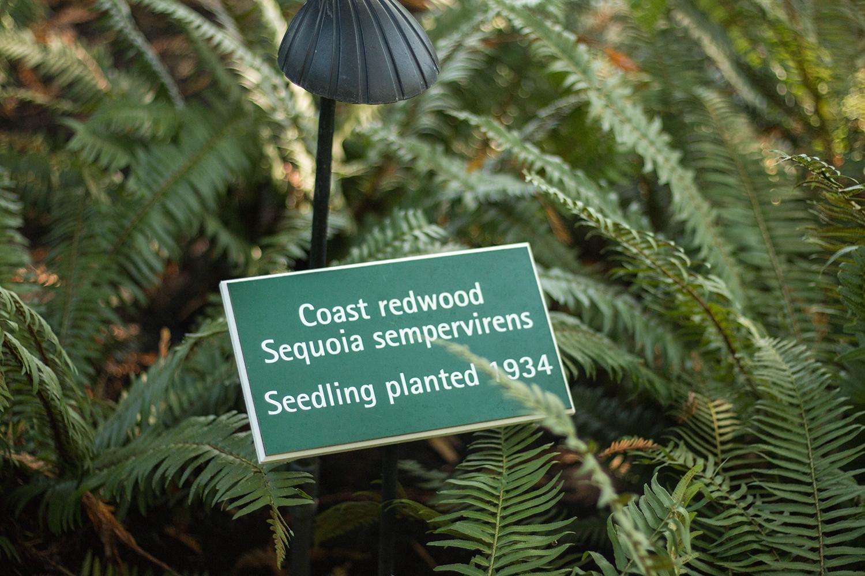 Redwood Butchart Gardens Victoria BC