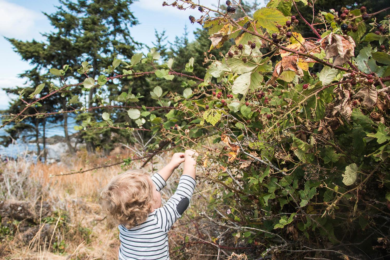 Lime Kilm State Park Blackberries
