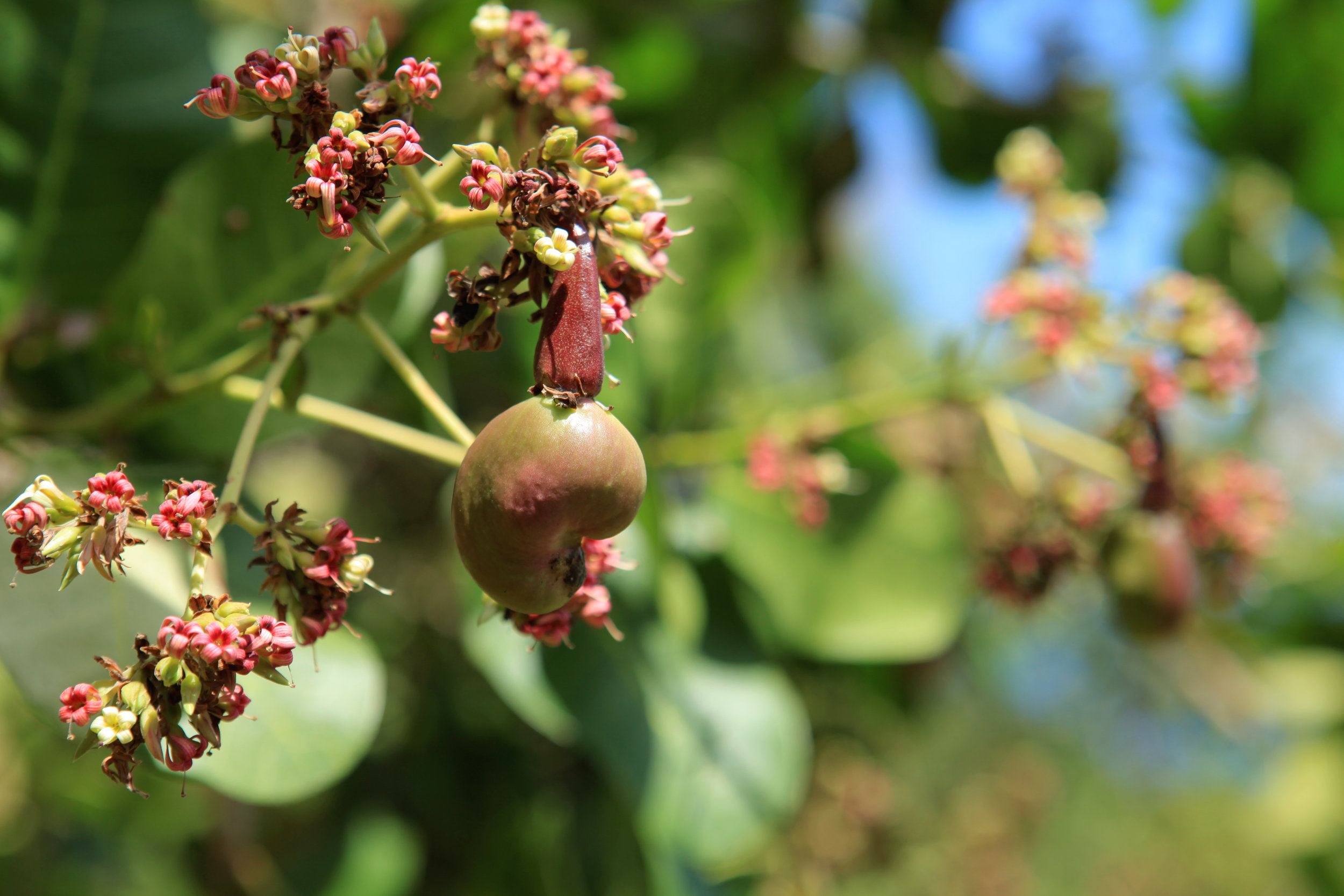 2017-9023-aguiladeosa-garden-produce.jpg