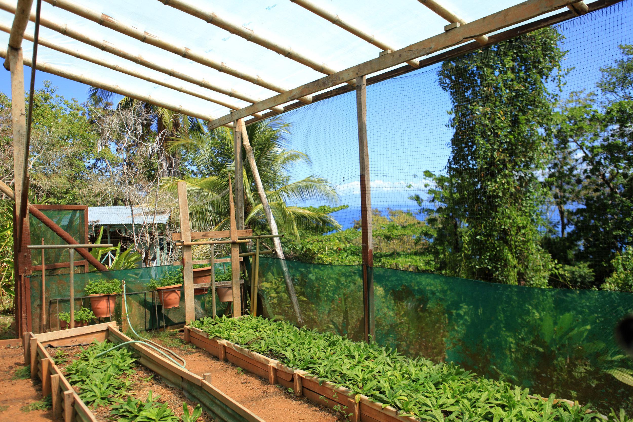 2017-8985-aguiladeosa-garden-produce.jpg