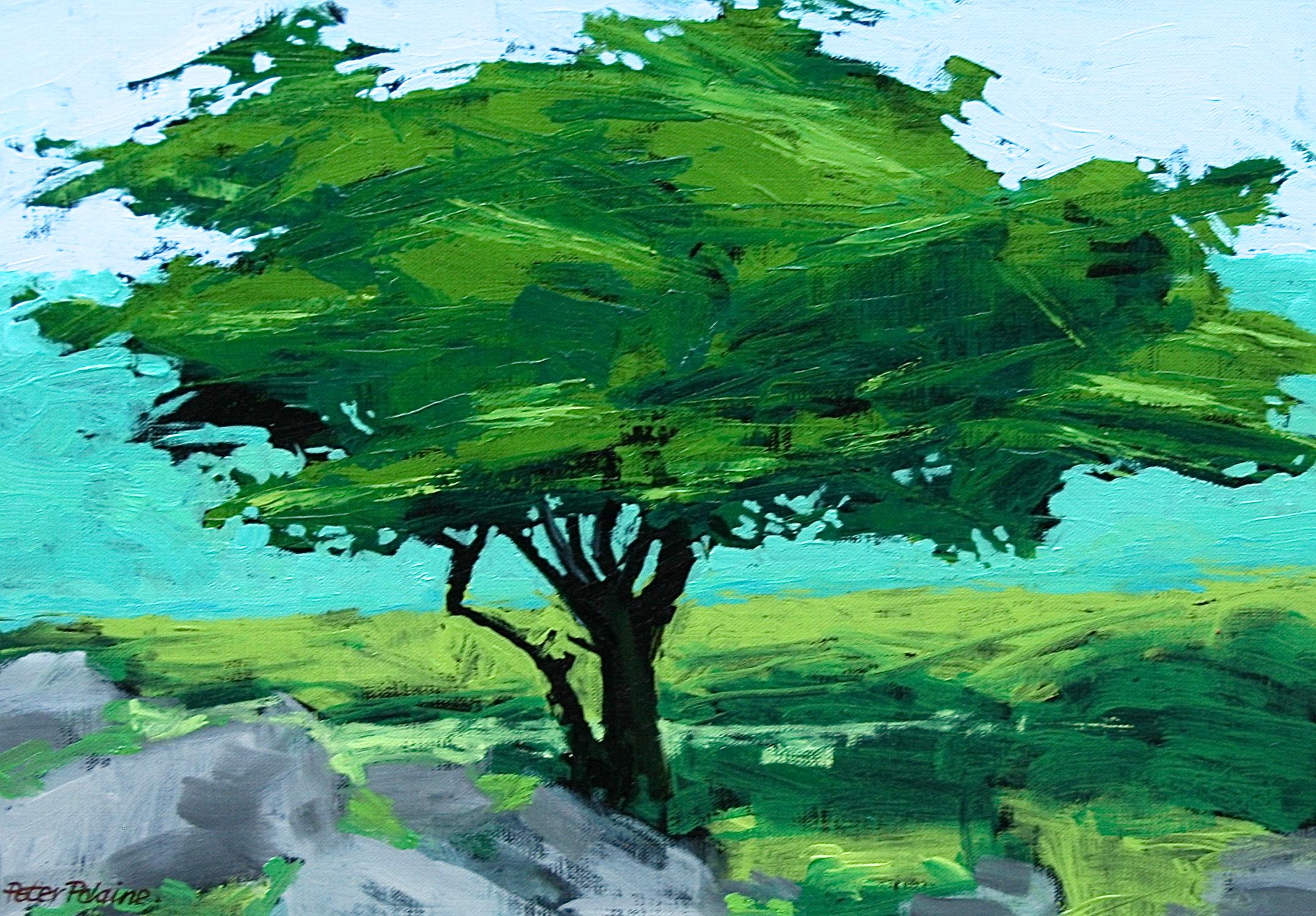 dartmoor-tree.jpg
