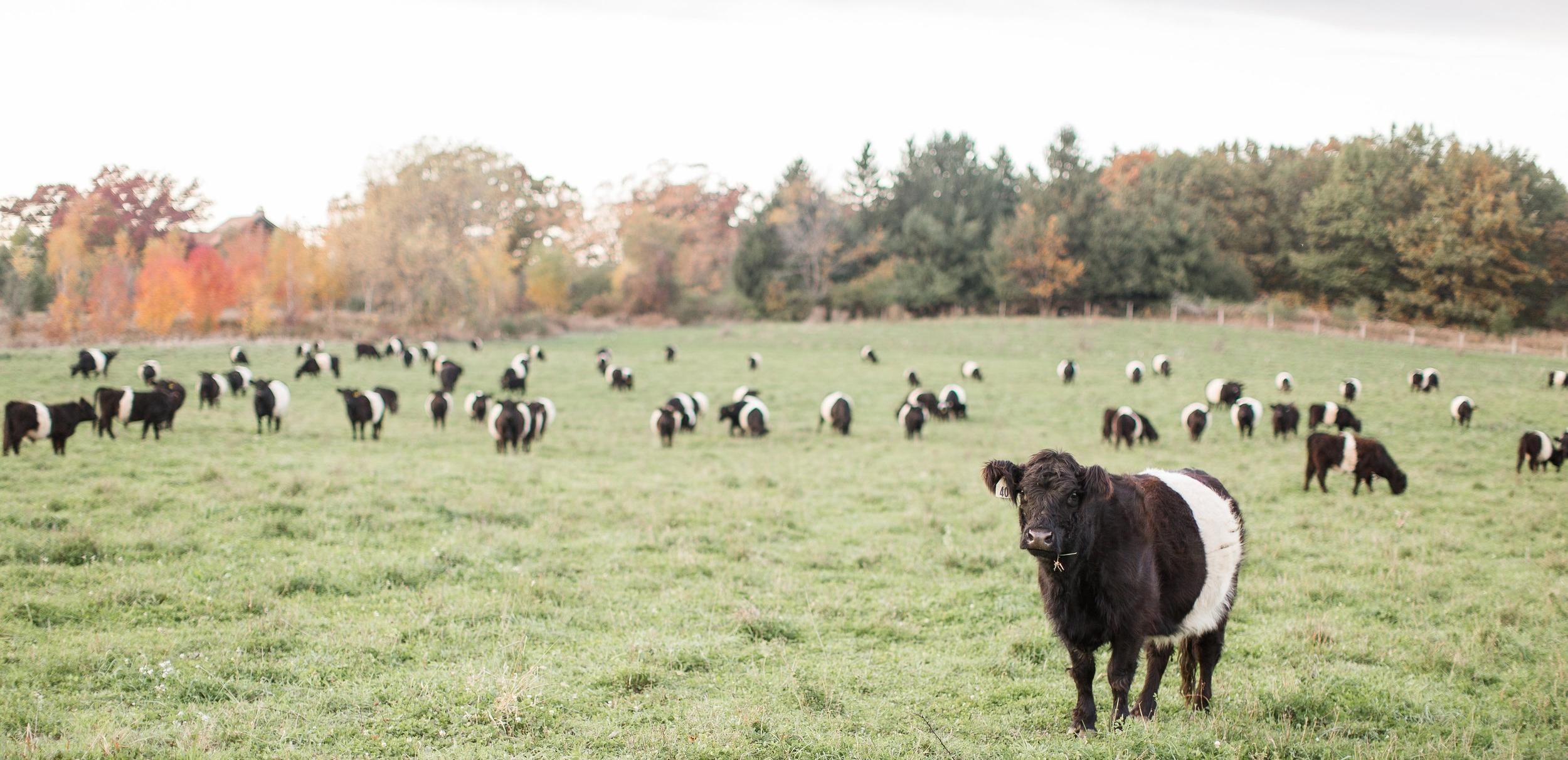 Alden Hills Organic Farms