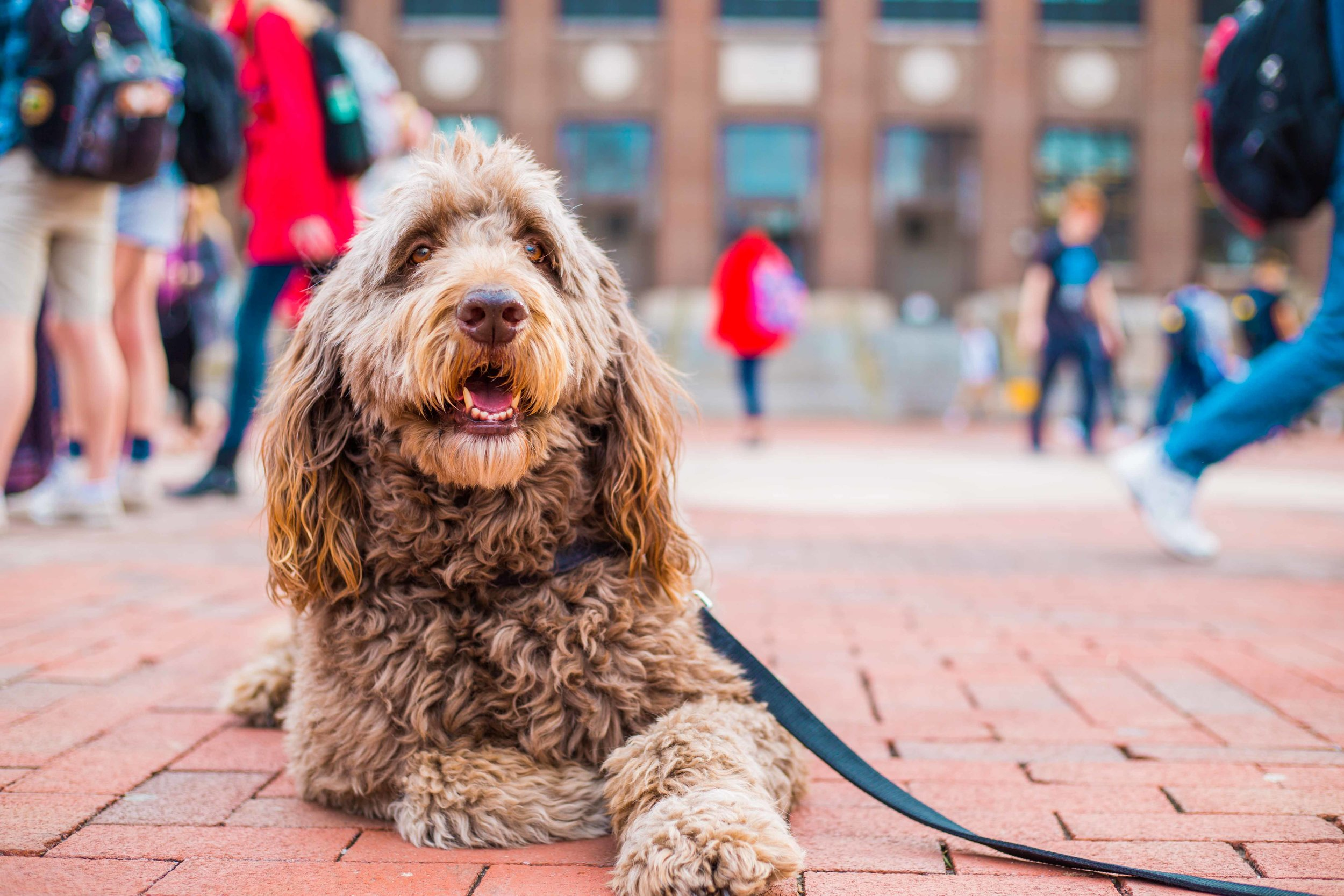 Dogs on the Diag