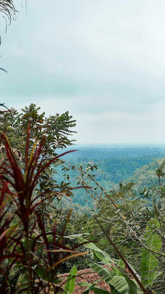Dschungel: Auf dem Weg zum Wasserfall NungNung