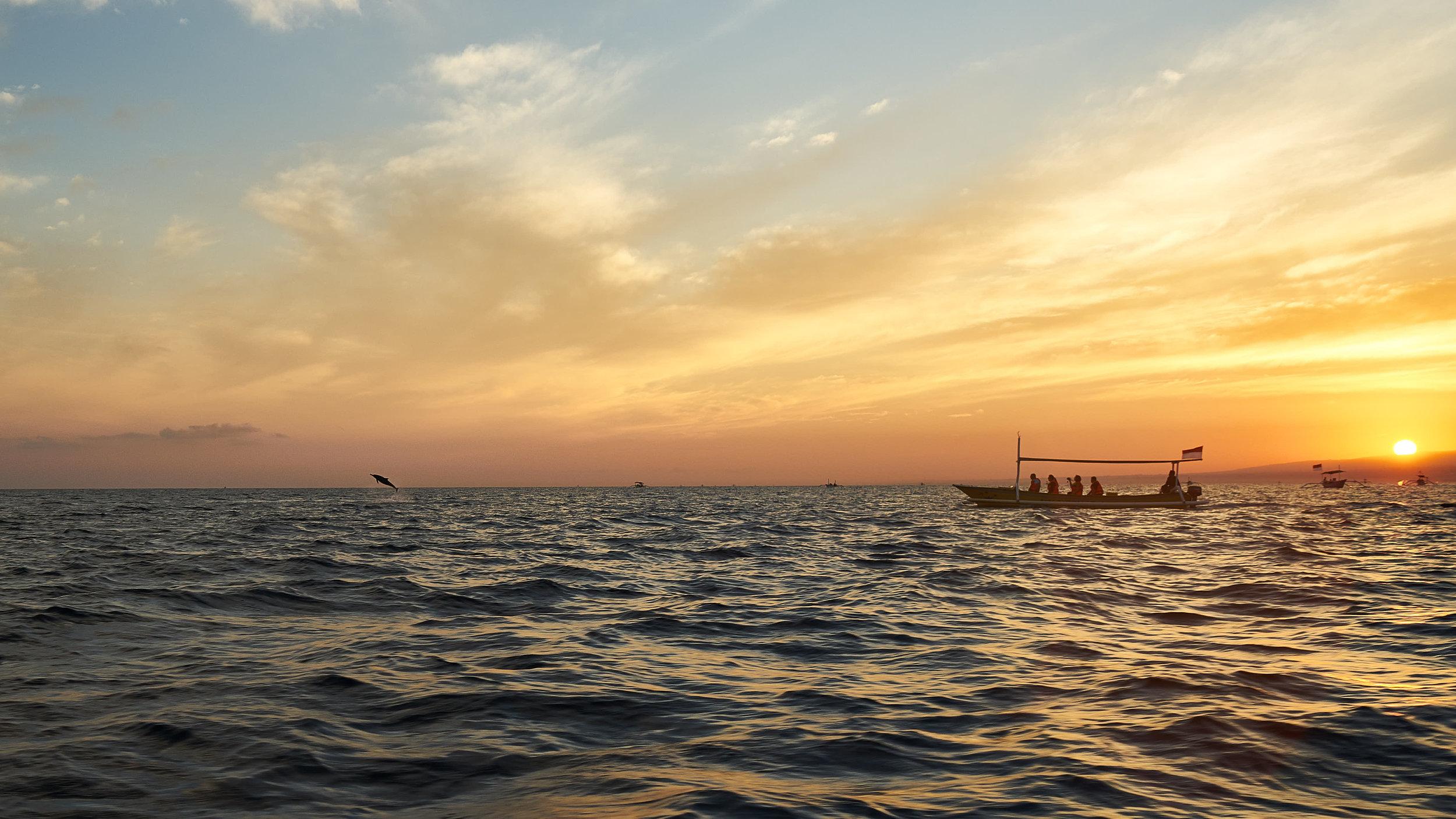 Touristenmagnet: Delfin-Spotting