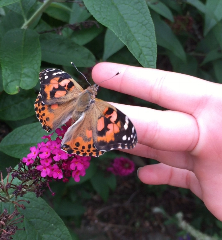 My daughter with one of the butterflies on her finger.