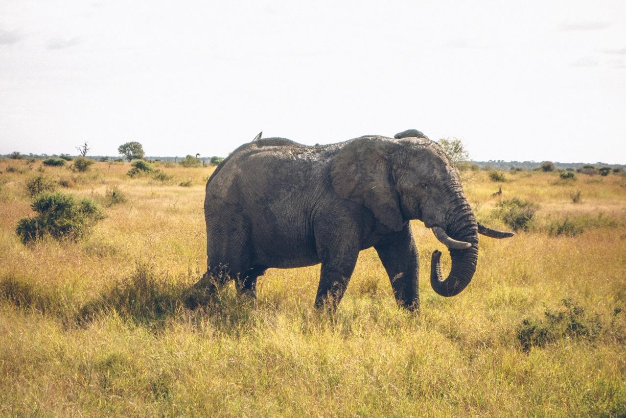 Wondermore+Elephant