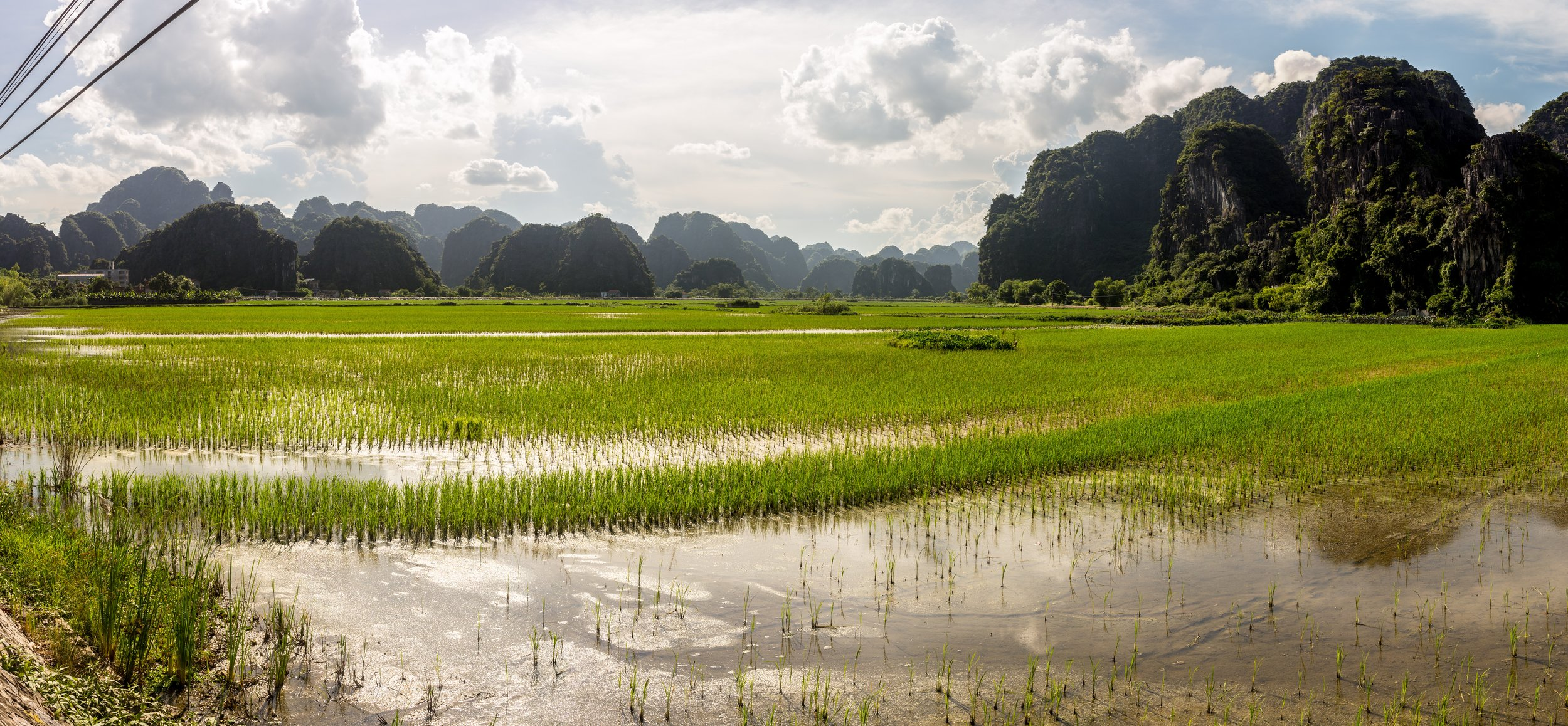 The Rice Fields of Tam Coc, Vietnam