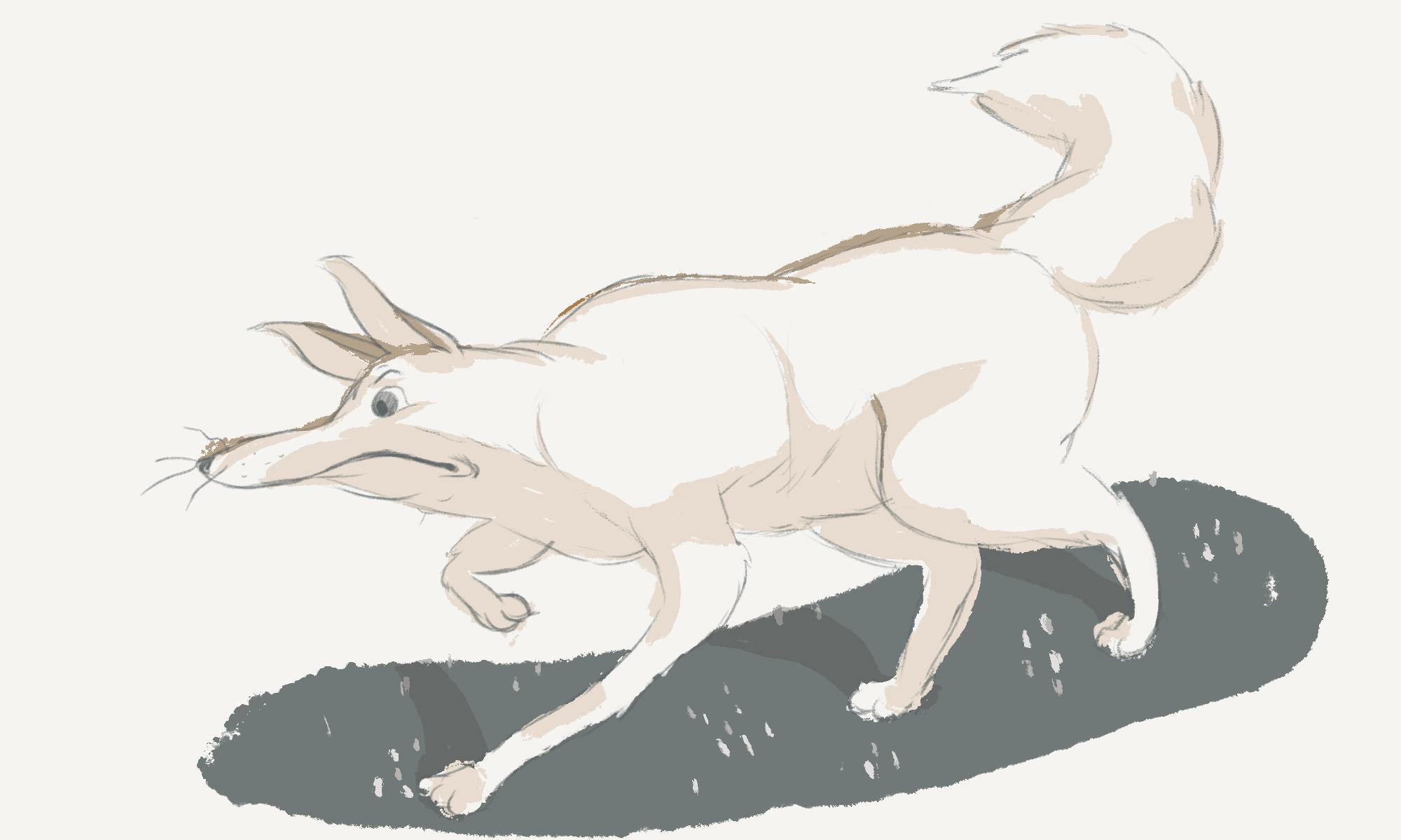 sketch_kitsune_v5_recolored.png