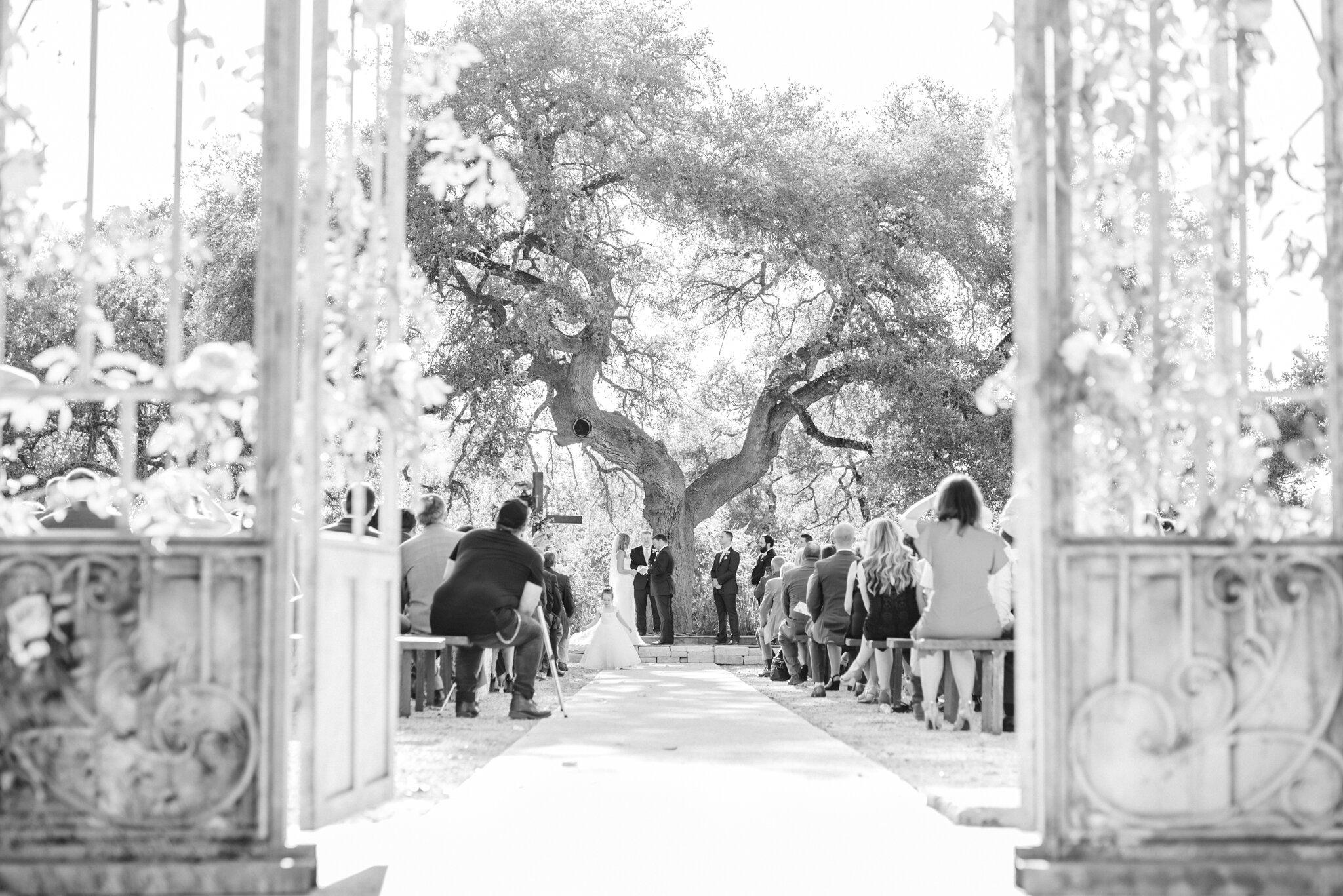 San Antonio Austin Boerne New Braunfels Spring Branch Texas Wedding Engagement Photographer Photography Hill Country Texas Park 31 Wedding Summer Wedding Pink Navy Gold Elegant Chic Wedding San Antonio Austin Texas photographer 52