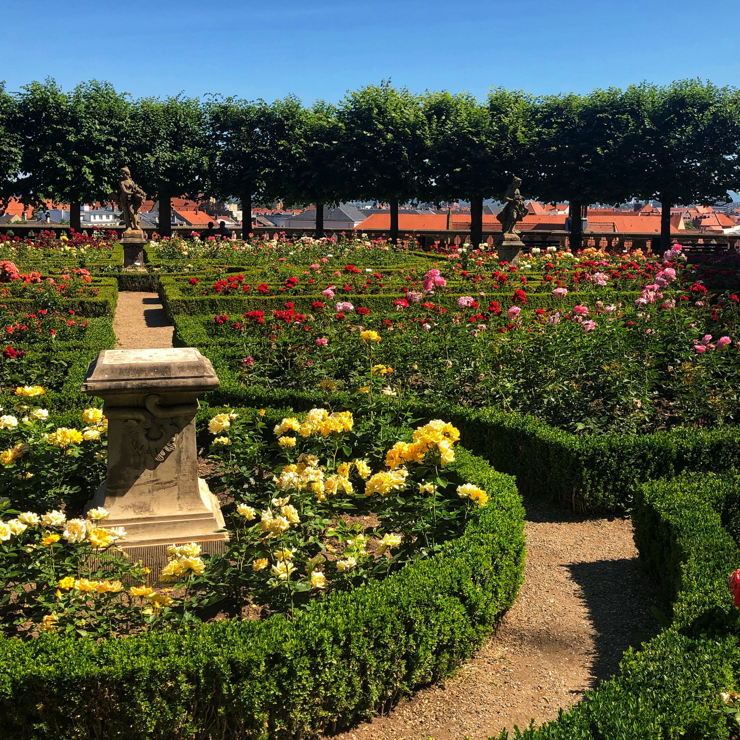 The Bamberg rose garden is tucked just out of sight, look for it on your map!
