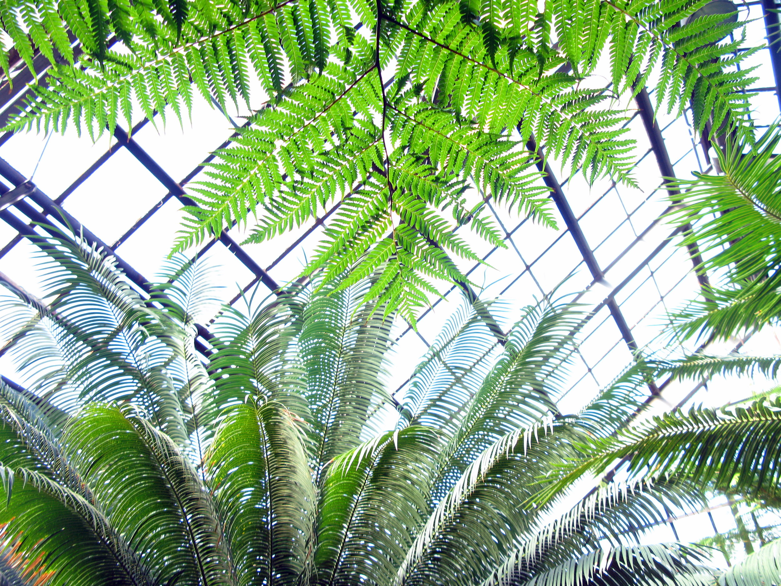 lincoln-park-conservatory.jpg