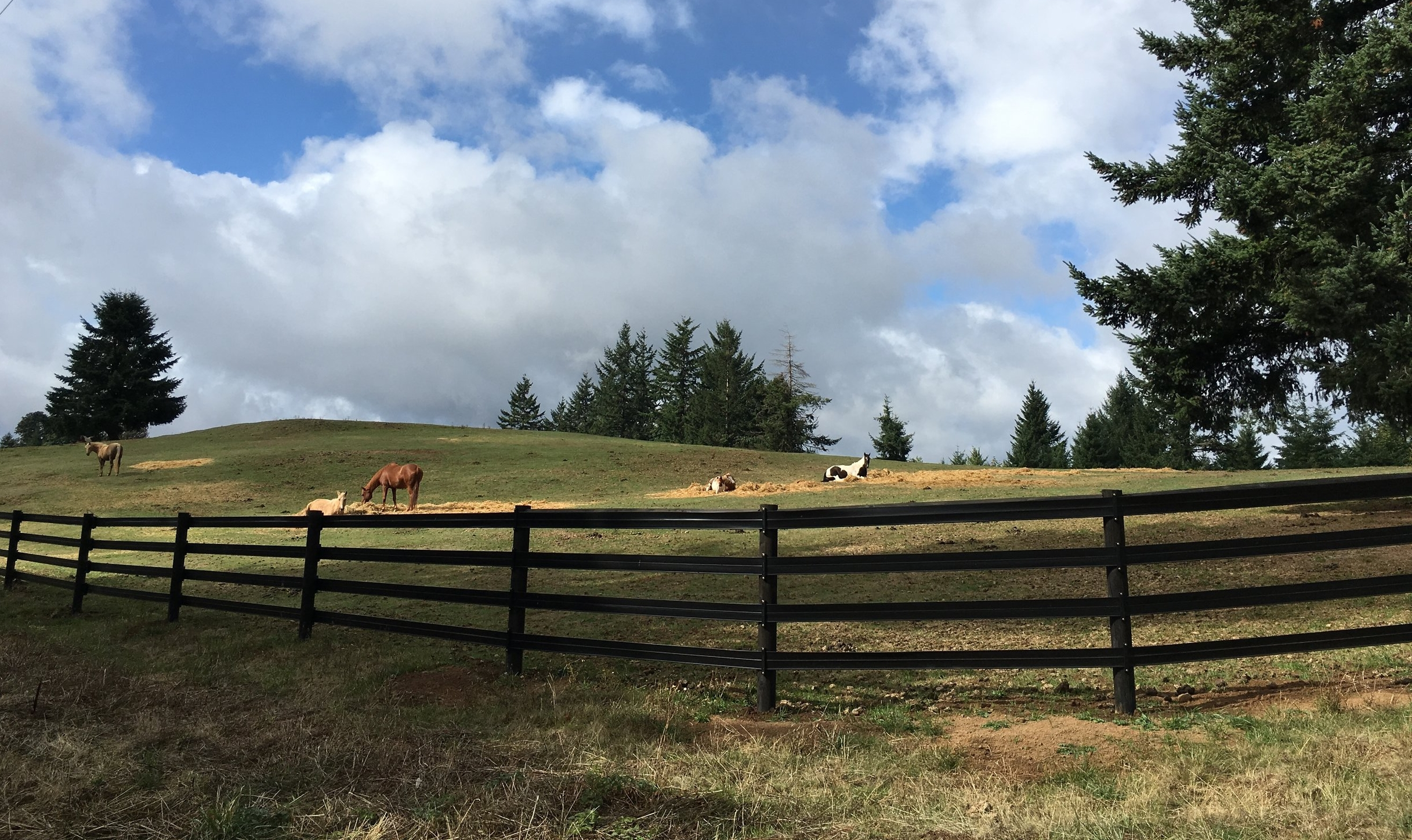 Our mares relaxing and enjoying their day outside in the pasture.