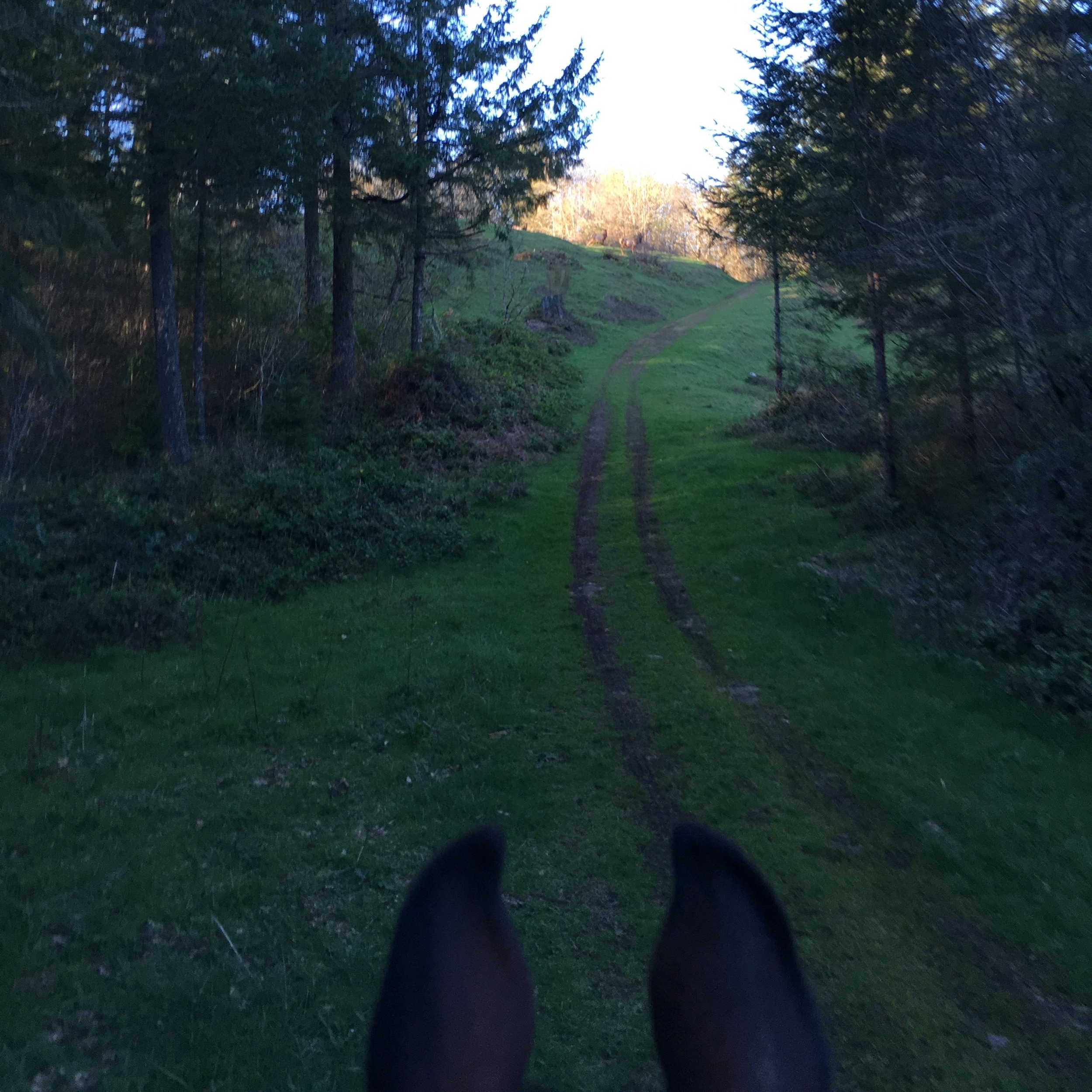 Our Trails Await! - Our boarders have access to over 30 miles of trails right behind our barn door. See wildlife, hear birds sing, and best yet- enjoy spending time with your horse!