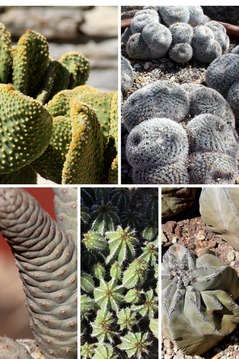 The diversity within the succulent family is not as diverse as other plants families but they do offer a range of sizes, shapes, colors and textures.