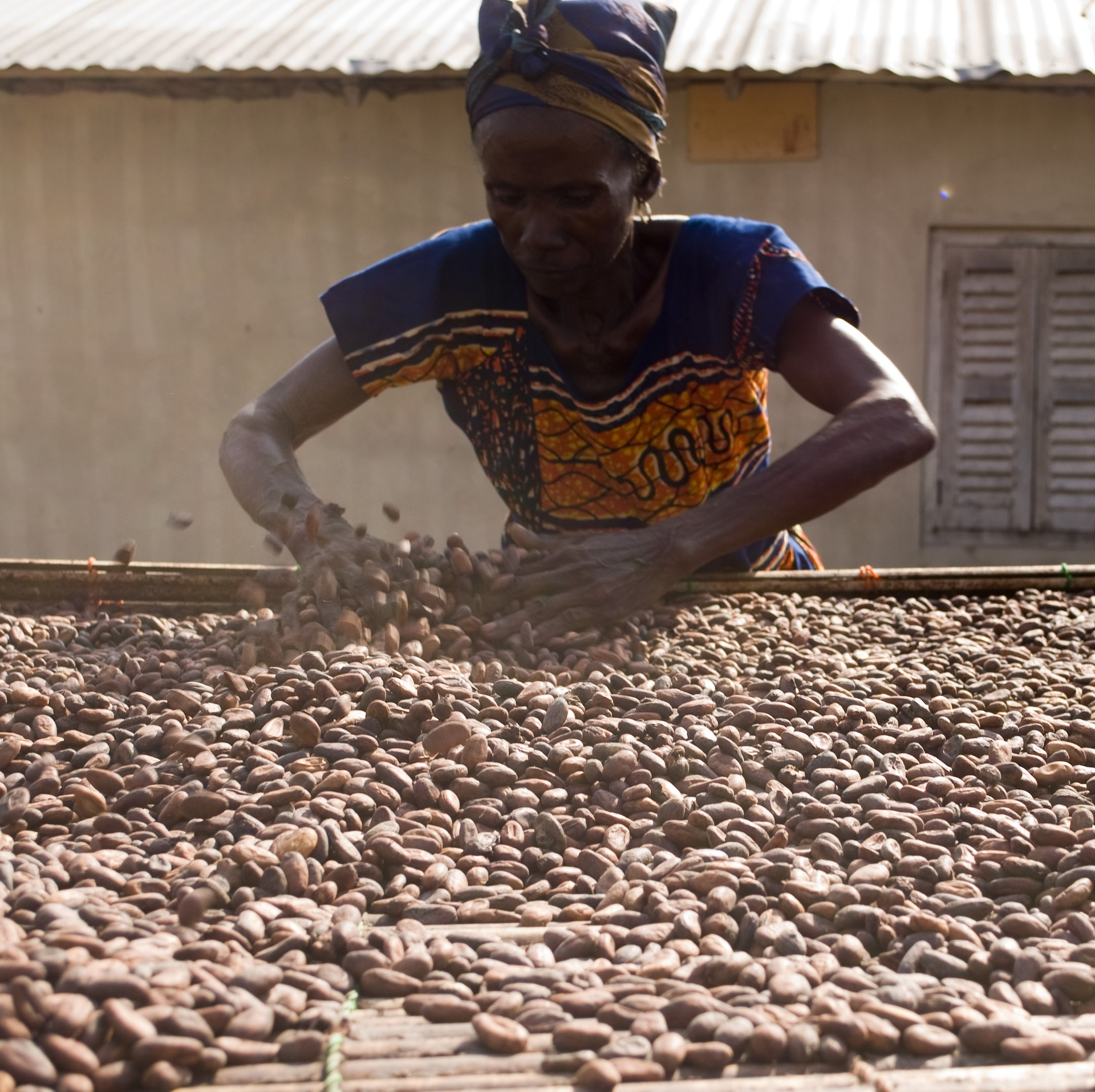 Cacao beans drying in Africa