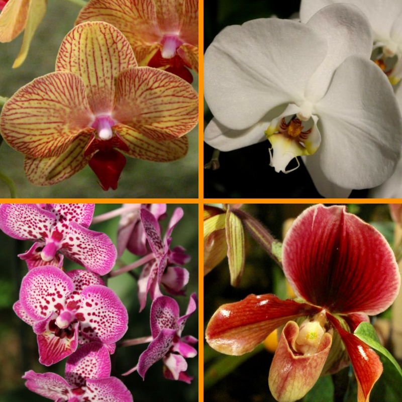 Photos from an tropical orchid display at the Northwest Flower & Garden Show