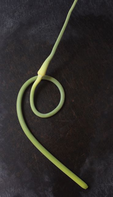 Garlic scapes are leafless flower stalks that appear in spring on hardneck varieties. Cut them off and use in soups and vegetable stir fries. An early spring pesto made with dandelion greens and garlic scapes is delicious.