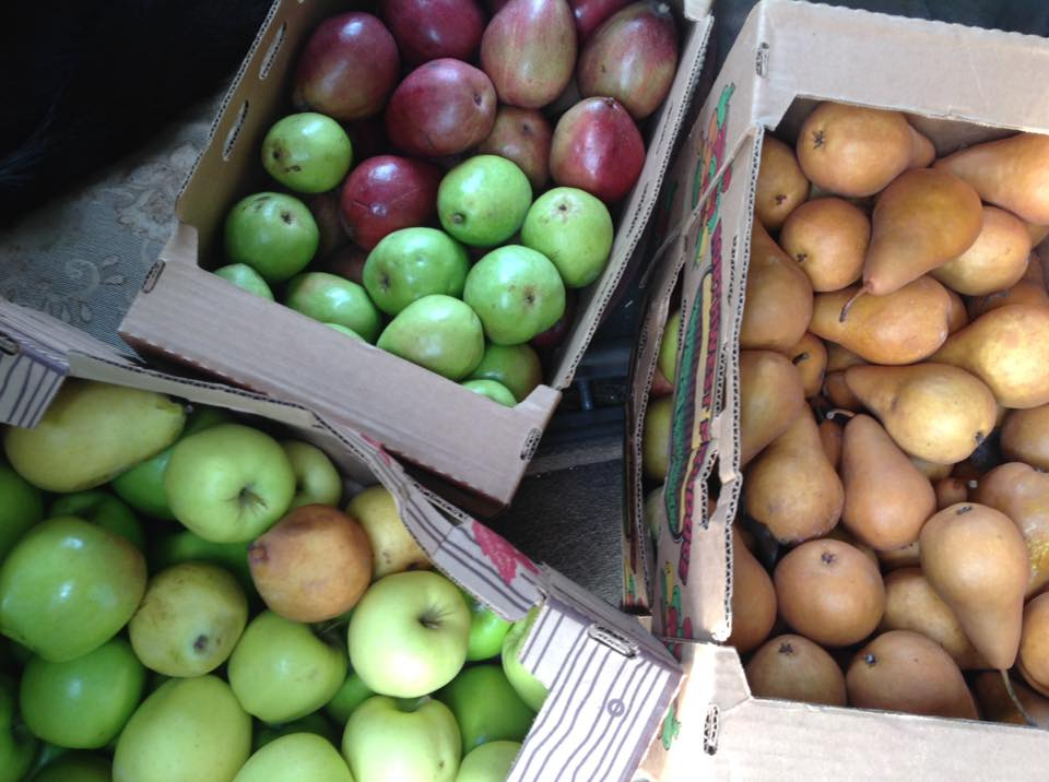 Red & green Anjou pears and Golden Russet Bosc pears PHOTO: http://www.codyorchards.com/