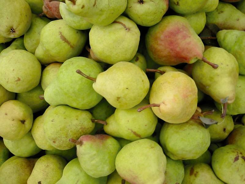 Anjou pears are considered winter pears because they are the last ones harvested and hold well for winter consumption. PHOTO: http://www.codyorchards.com/