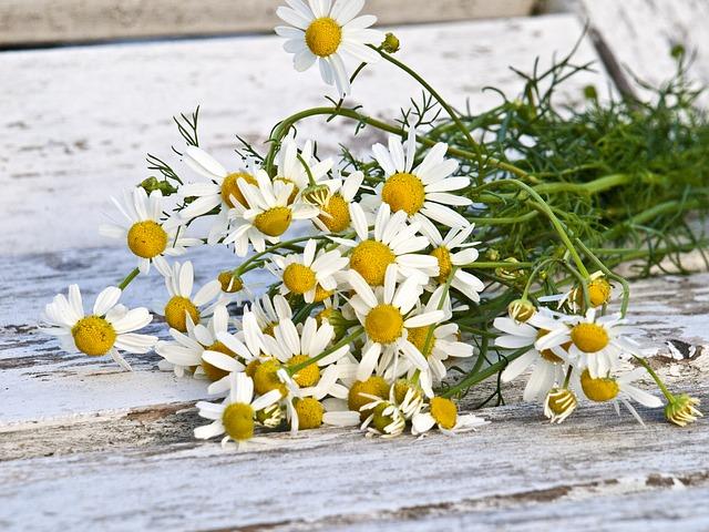 chamomile-1589449_640.jpg